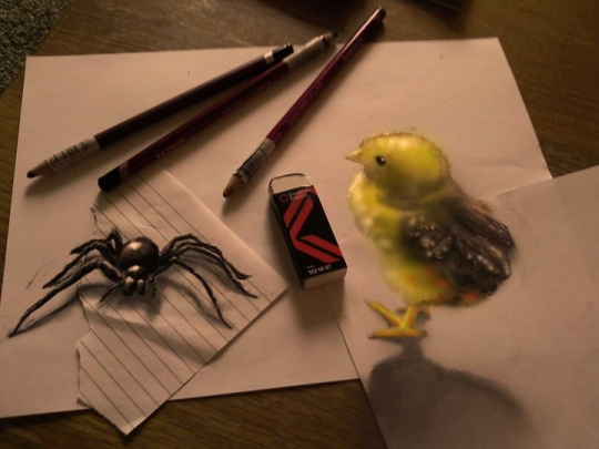 Spider And The Chick