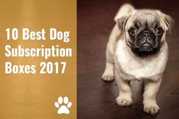 10 Best Dog Subscription Boxes 2018